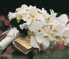 White orchid and stephanotis wedding flowers
