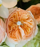 Sparkling engagement ring situated in peach peony