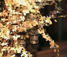 Birch trees with orchids and lanterns