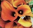 Princess engagement wedding ring on orange calla lily