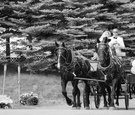 Black and white photo of horse and wagon transport